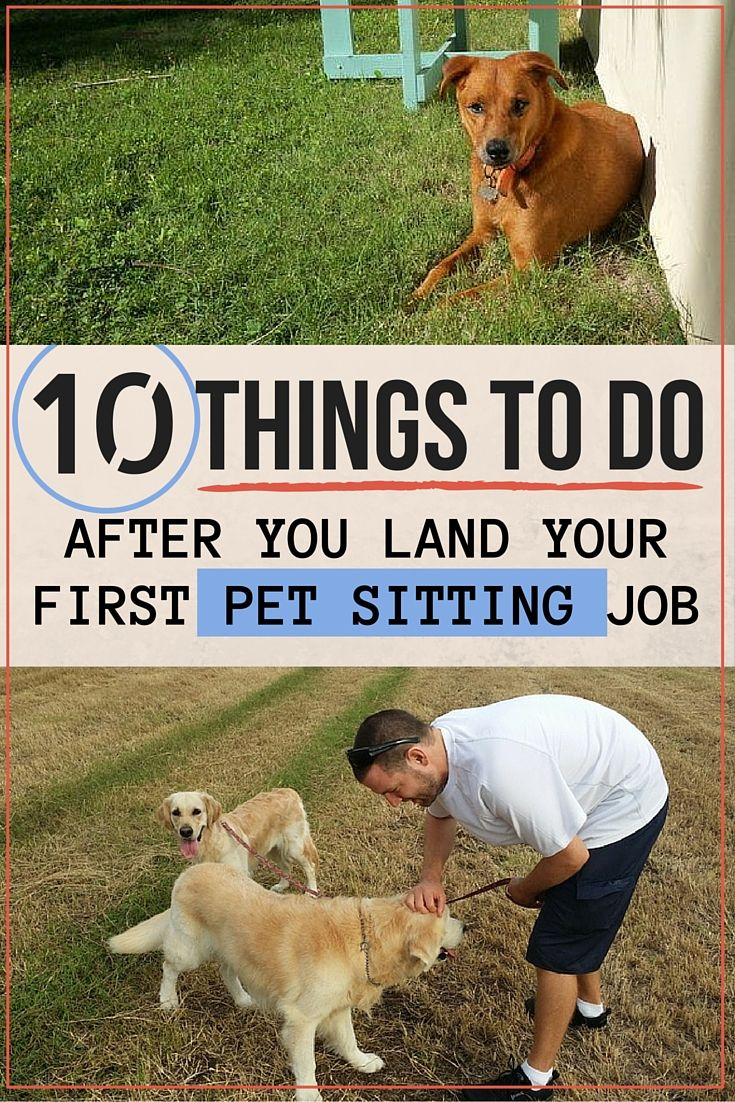 10 Things To Do After You Land Your First Pet Sitting Job