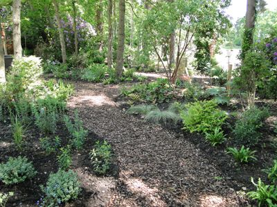 medium sized contemporary garden surrey woodland walk and planting