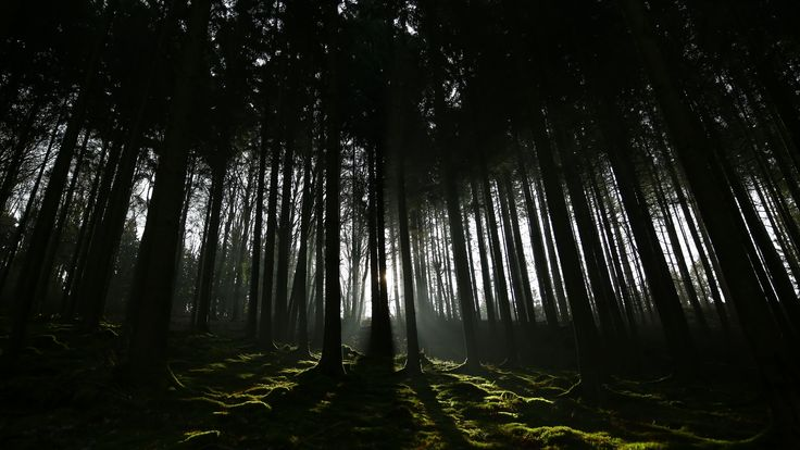 59 4k Dark Wallpapers On Wallpaperplay Forest Wallpaper Dark Wallpaper Hd Nature Wallpapers