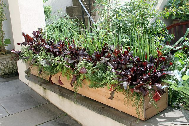 edible windowbox -such a small garden, yet by the looks of it, it can feed enhance your meals for a very long time.