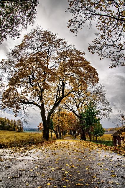 Autumn road by Lars-Ove Törnebohm