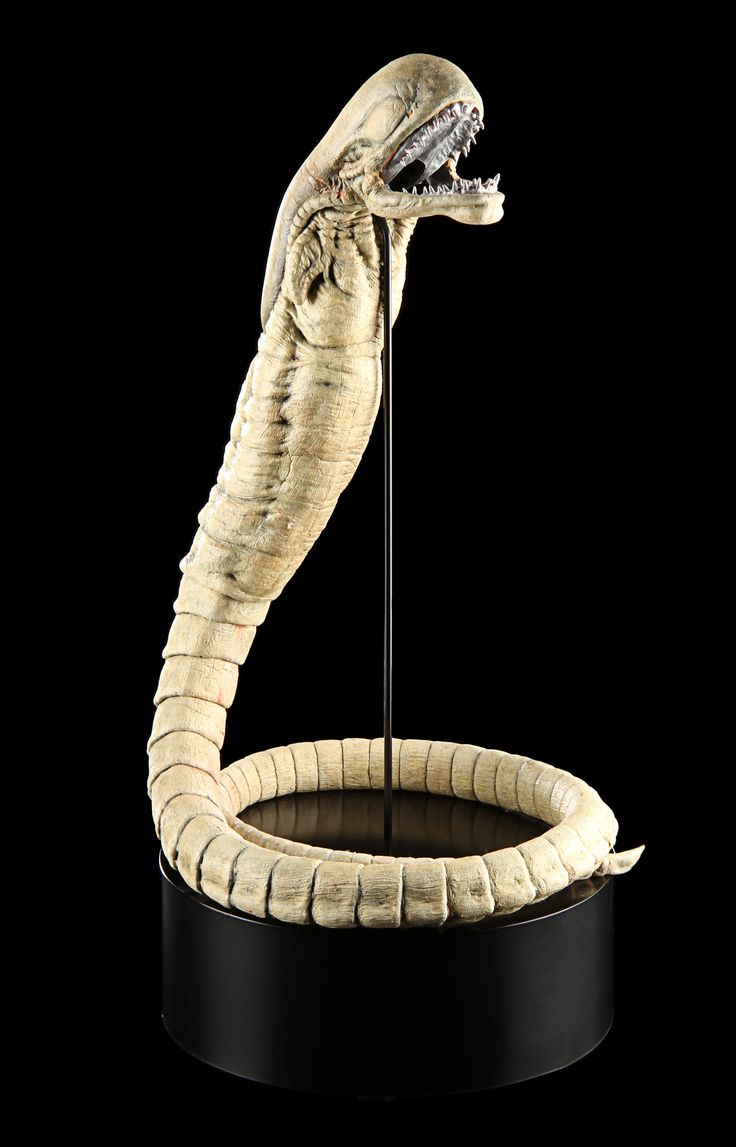 Today's #TBT prop is the Chestburster Rod Puppet ALIEN VS. PREDATOR (2004), sold back in our 2016 Live Auction!  Created by the artists at Amalgamated Dynamics Incorporated, this puppeted nascent xenomorph was used for the scene in which the Scar Predator (Ian Whyte) caught, and subsequently killed, the Chestburster that erupted from the body of archaeologist Sebastian (Raoul Bova).  #Chestburster #Alien #Xenomorph #AVP #Prop #PropStore