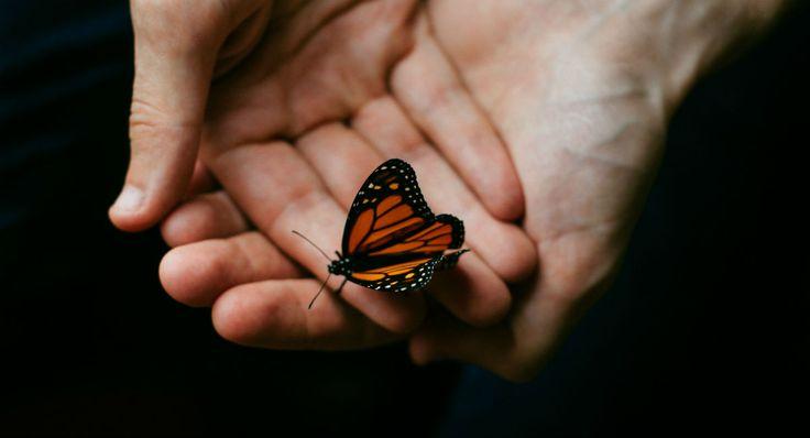 Escoge una mariposa y te diremos lo que dice sobre ti