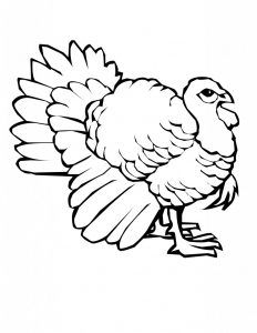 turkey coloring pages printable - Coloring Activities For Children