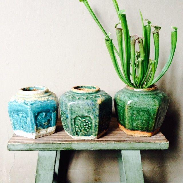 Lovely ginger jars Prachtige gemberpotten. Beperkte voorraad TheFinch.nl  € 7,50