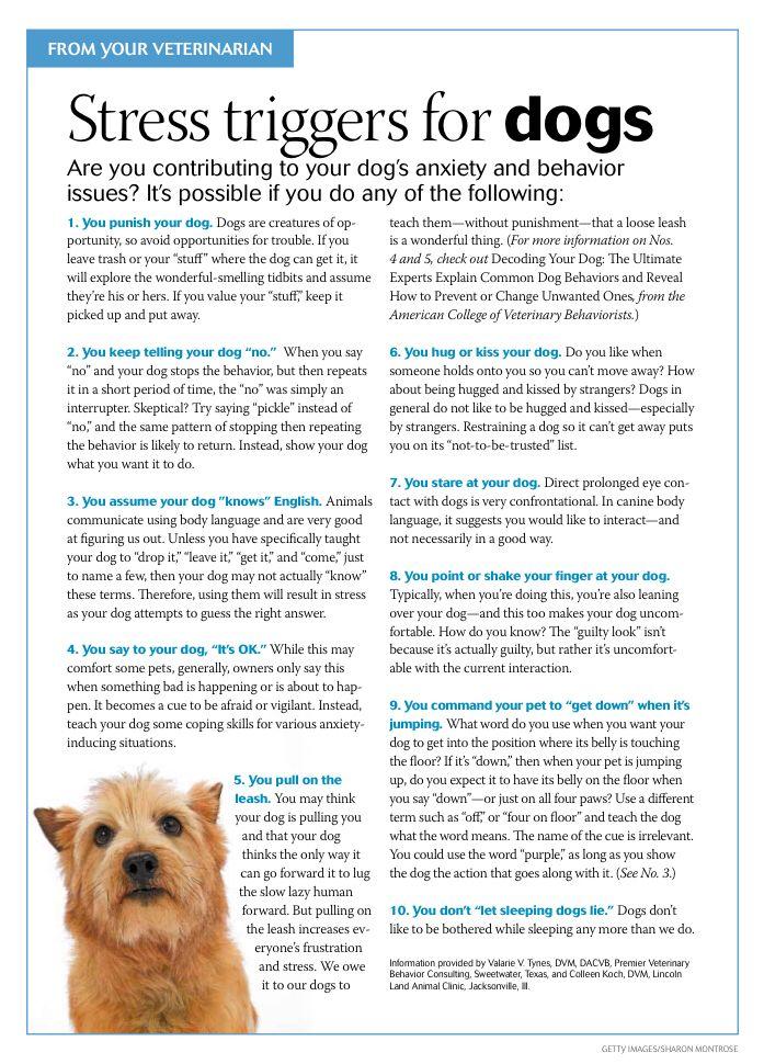 Custer Mcdermott Animal Hospital In Plano Texas 75025 Veterinary Clinic Meds For Dogs Dog Wellness Mobile Vet