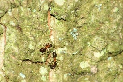 how to get rid of ants in your yard naturally the o 39 jays get rid of ants and natural. Black Bedroom Furniture Sets. Home Design Ideas
