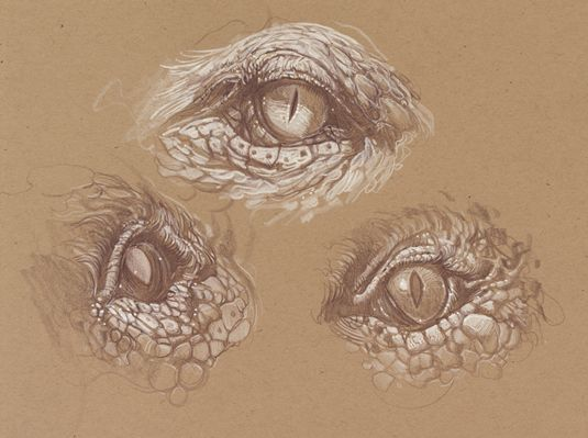 8 Pro Tips for Drawing Dragons