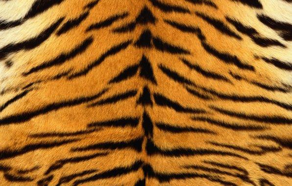 Обои шкура, тигр, полоски, мех, полосатый картинки на рабочий стол, раздел текстуры - скачать