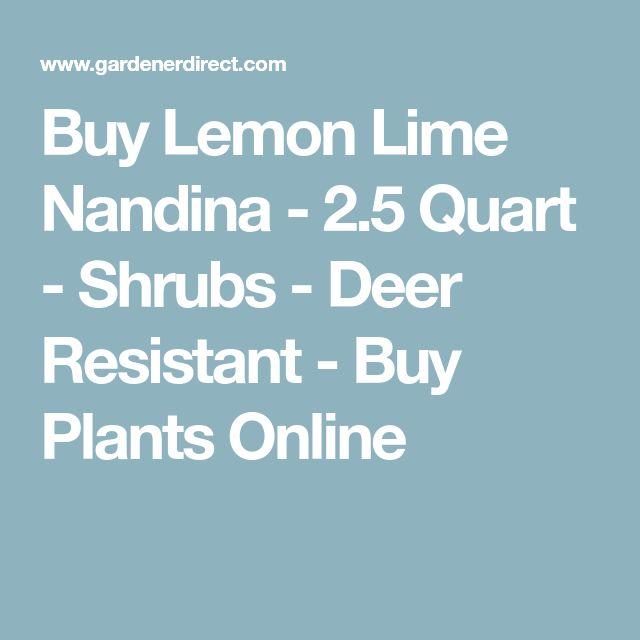 Buy Lemon Lime Nandina - 2.5 Quart - Shrubs - Deer Resistant - Buy Plants Online