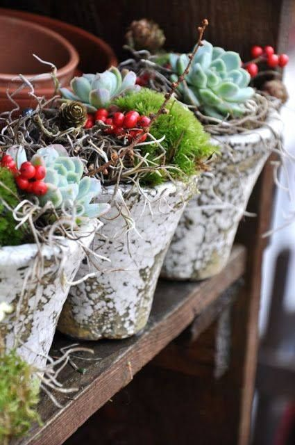 Via freestylehippiesou . Weathered pots of succulents and berries