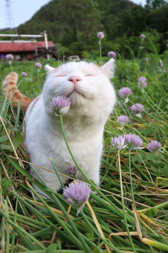 Ja, Pflanzen machen Spaß im Haus und Ihr Kätzchen mag die – Vacation To World