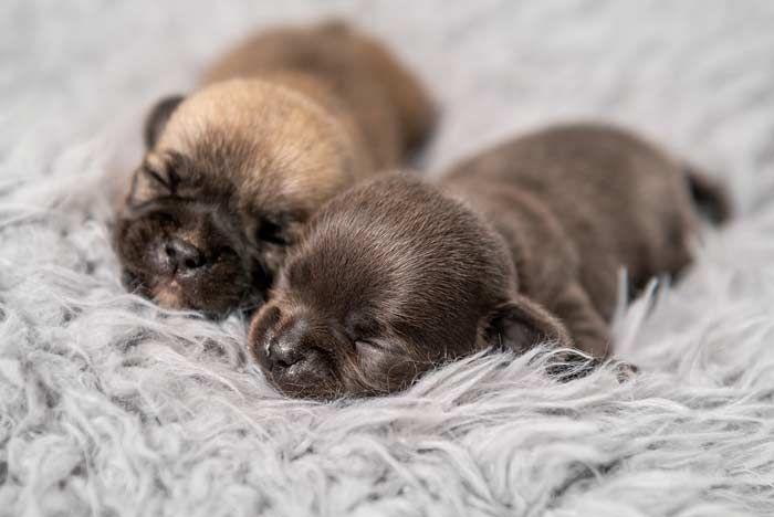 Nombres Para Perros Top 100 Más Bonitos Y Originales Nombres De Perros Nombres Para Perros Machos Nombres De Perro Hembra