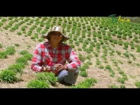 Como Producir Plantas Organicas Parte 2 - Juan Gonzalo Angel TvAgro