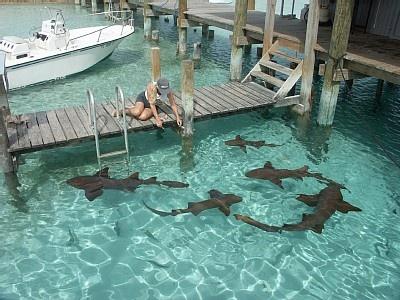 pet sharks representation