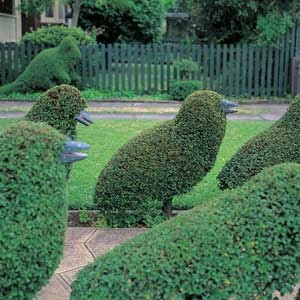 Flock of Topiary Birds-would be pretty with the suggestion of a closed beak as part of bush?
