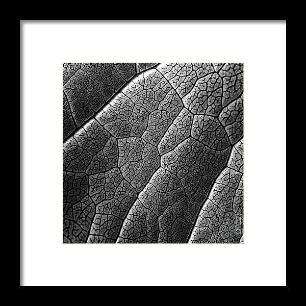 Infrared Leaf Texture With Visible Stomata Covering The Outer Epidermis Layer Framed Print