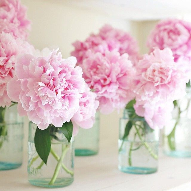 Lovely collection of pale-pink peonies in mason jars
