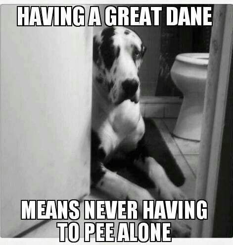 Having a great day means never having to pee alone