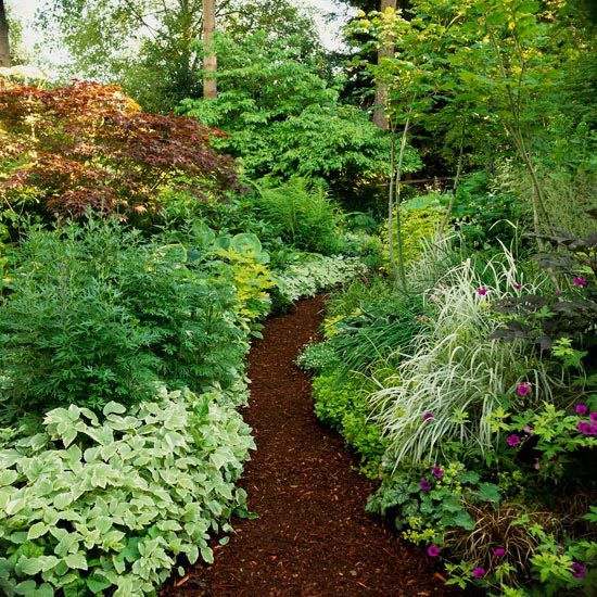 Shade Garden - a path mulched with dark wood chips becomes a stunning focal point when surrounded by white-variegated bishop's weed, ornamental grasses, or golden groundcovers