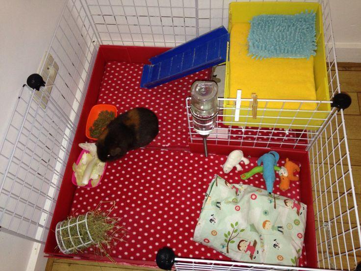 Cavy cage pour mon cobaye cochon d inde gp c c for Where to get c c cages