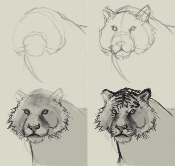 step by step how to draw a tiger face