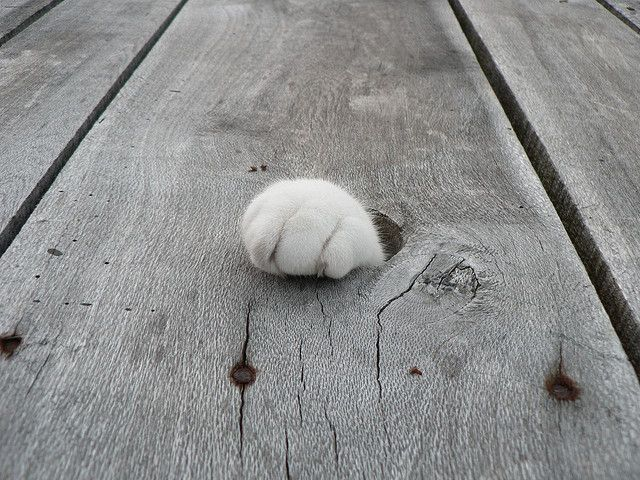 paw...out of nowhere