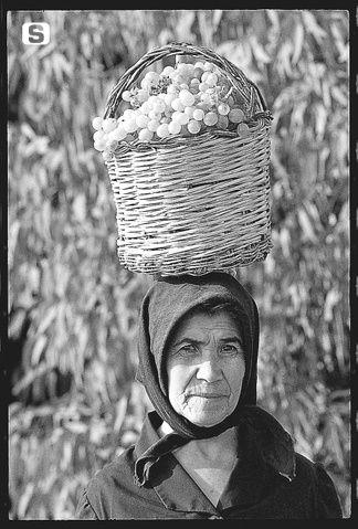 Italian Vintage Photographs  ~ La donna e la vendemmia