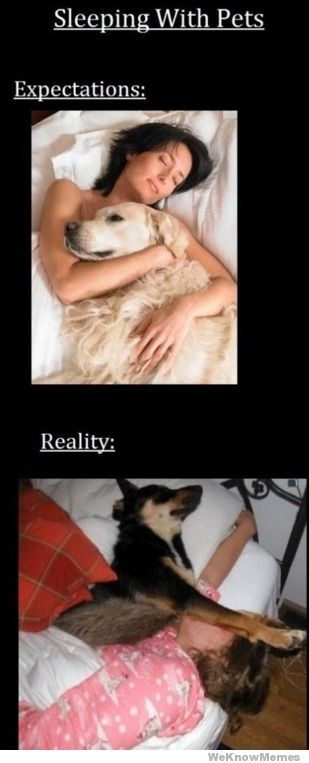 Sleeping with Pets.  So true.
