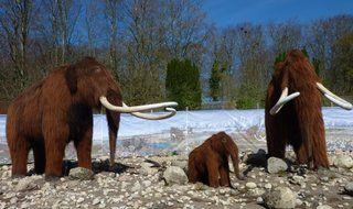 Istiden i Aalborg Zoo, læs mere om det spændende udstilling på lokalblokken.dk