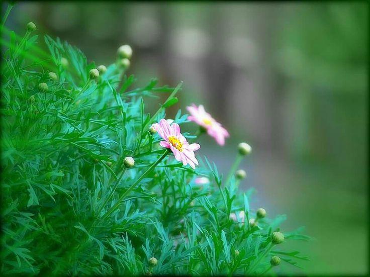 Piccoli fiori Grande gioia