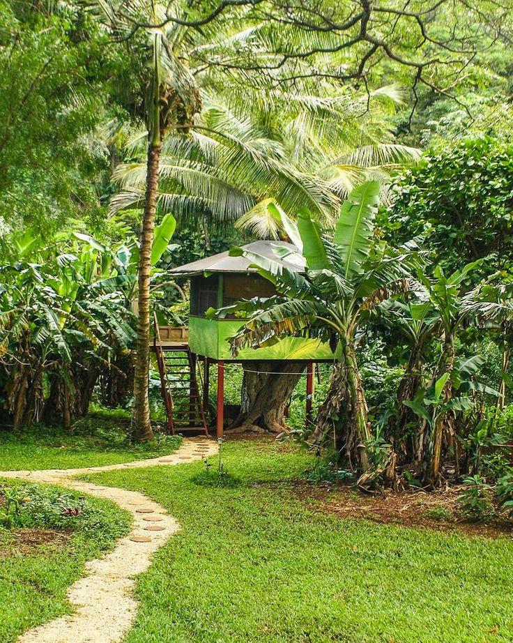 en boomhut. We weten dat dit absoluut niet chique klinkt. Maar een boomhut op het strand van Hawaii, klinkt dat al chiquer? Tussen de bomen met bananen, papayas, kokosnoten, avocado's, mango's en lychees? Zodat je deze zelf kunt plukken en hiermee een vers ontbijt kunt maken, terwijl je uitkijkt op de zee? Ja? 74 euro per nacht voor twee personen.