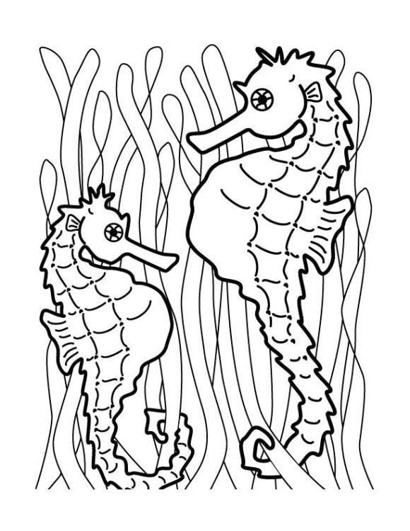 Seahorse Coloring Page