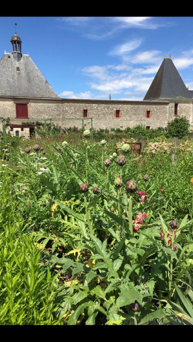 Chateau's gardens! Artichokes!!