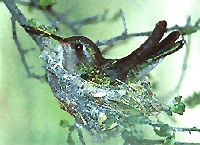 Debbie's Tips For Attracting and Feeding Hummingbirds