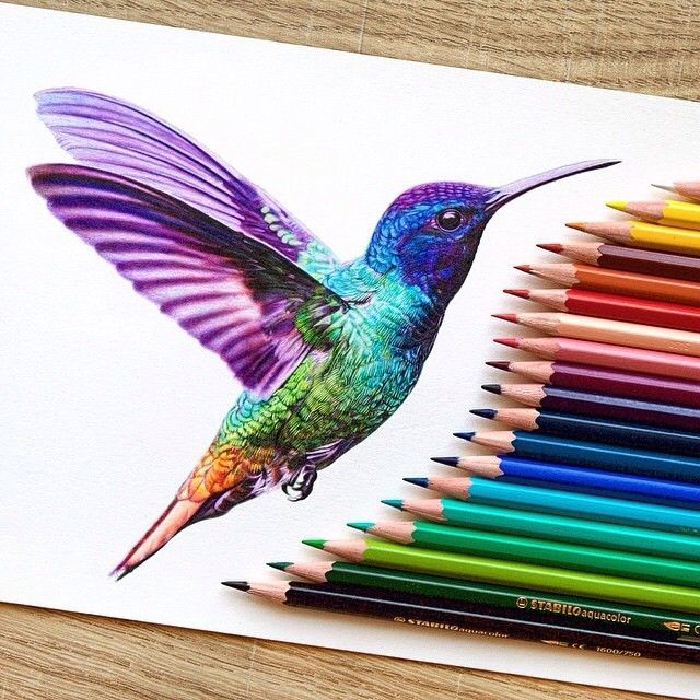Hummingbird, by Dan Stirling  also shows the coloured pencils used in the making of this spectacular piece.