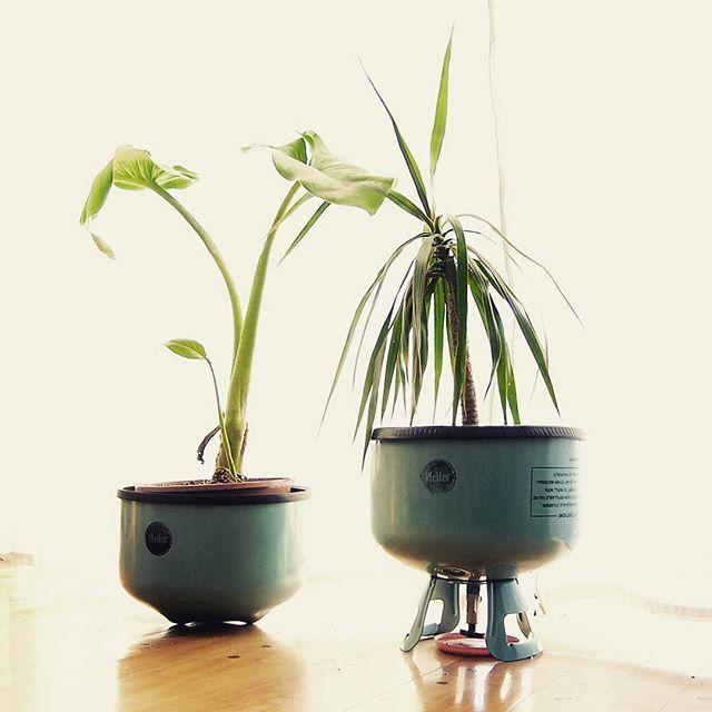 Maceta freones baja y grifo alta en color celeste combo for Varias plantas en una maceta
