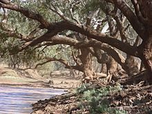 "The Combo Waterhole is thought to be the location of the story that inspired ""Waltzing Matilda""."