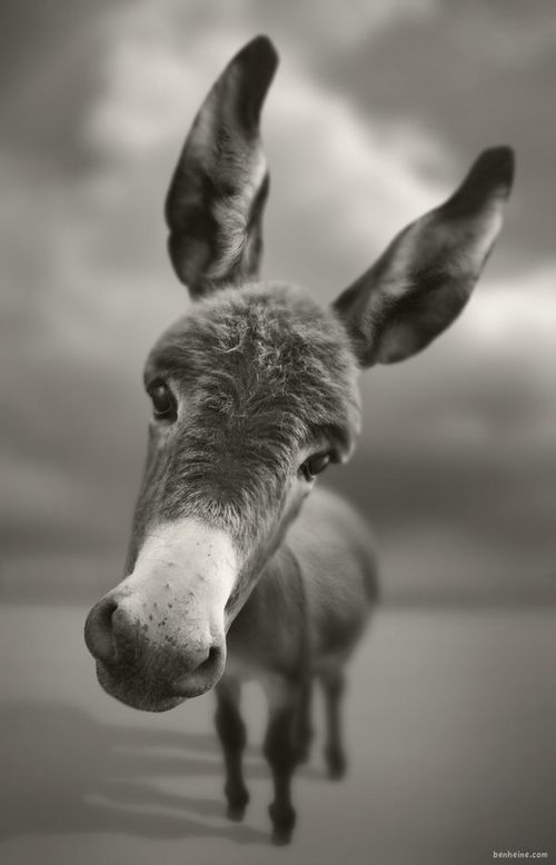 Yes, donks are a necessity at my home. Look how sweet that face is. Plus, who else wants those mints you get at Sonic?