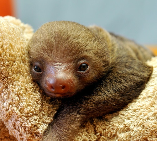 Sloths are freaking ADORABLE!