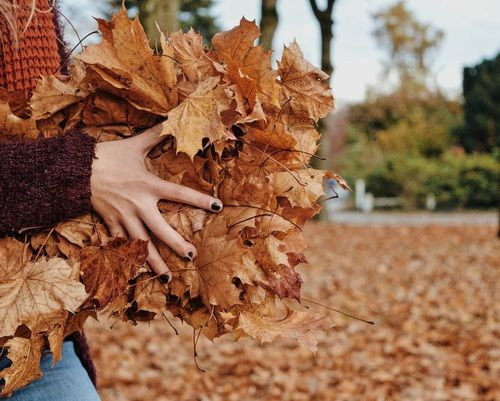 autumn, brown, and hands image