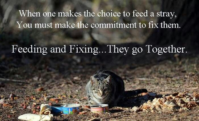 Amen! If you feed them, they are your responsibility to get them fixed.  Stop the over population.