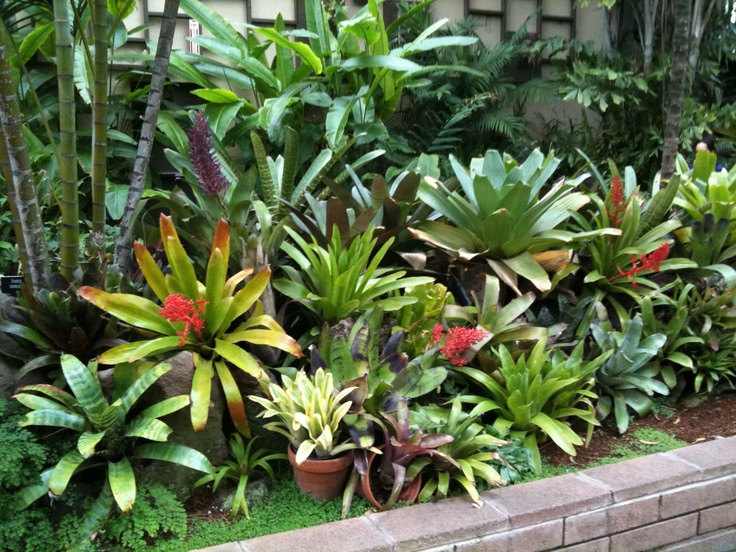 Bromeliads At San Diego Zoo Pointy Garden Plants And