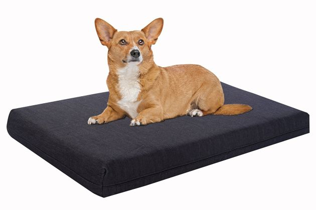 Pet Support Systems Dog Beds - Orthopedic | Orthopedic Dog Bed | Orthopedic Dog Bed Reviews