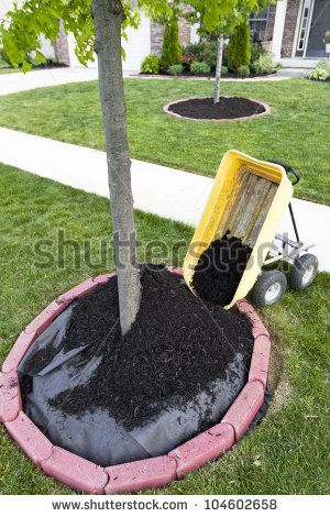 Dumping Mulch around the trees and shrubs, yard maintenance is fun. Weed barriers are very useful.