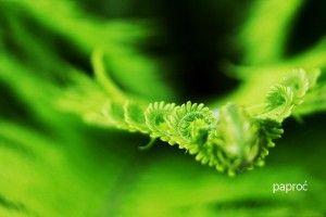 zdrowie.hotto.pl.pl-popularne-rośliny-domowe-oczyszczające powietrze-klimatyzacja-dla-alergików-paproć