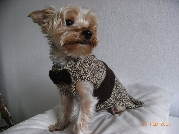Douglas Dog Knitting Pattern : small dog sweater hand knit, yorkie clothes, yorkie coat, small dog clothes, ...
