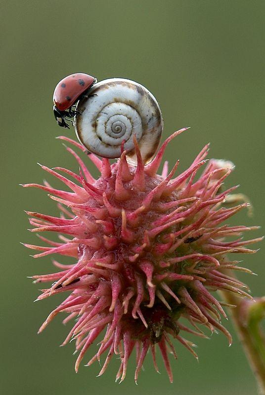 Ladybug  Snail