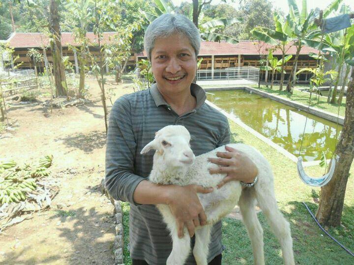 White baby sheep...