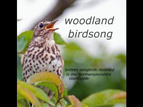 ▶ Woodland Birdsong: Sixteen Glorious Songbirds - YouTube